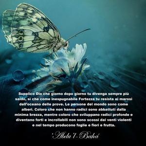 <p>Supplico Dio che giorno dopo giorno tu divenga sempre pi&ugrave; saldo, s&igrave; che come inespugnabile Fortezza tu resista ai marosi dell&rsquo;oceano delle prove. Le persone del mondo sono come alberi. Coloro che non hanno radici sono abbattuti dalla minima brezza, mentre coloro che sviluppano radici profonde e diventano fori e incrollabili non sono scossi dai venti violenti e nel tempo producono foglie e fiori e frutta.</p>  <p>&lsquo;Abdu&rsquo;l-Bah&aacute;</p>